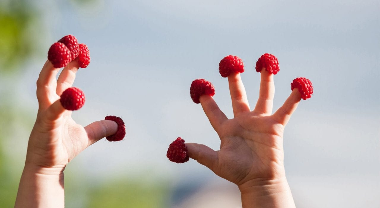 young child with healthy reaspberries on their fingers
