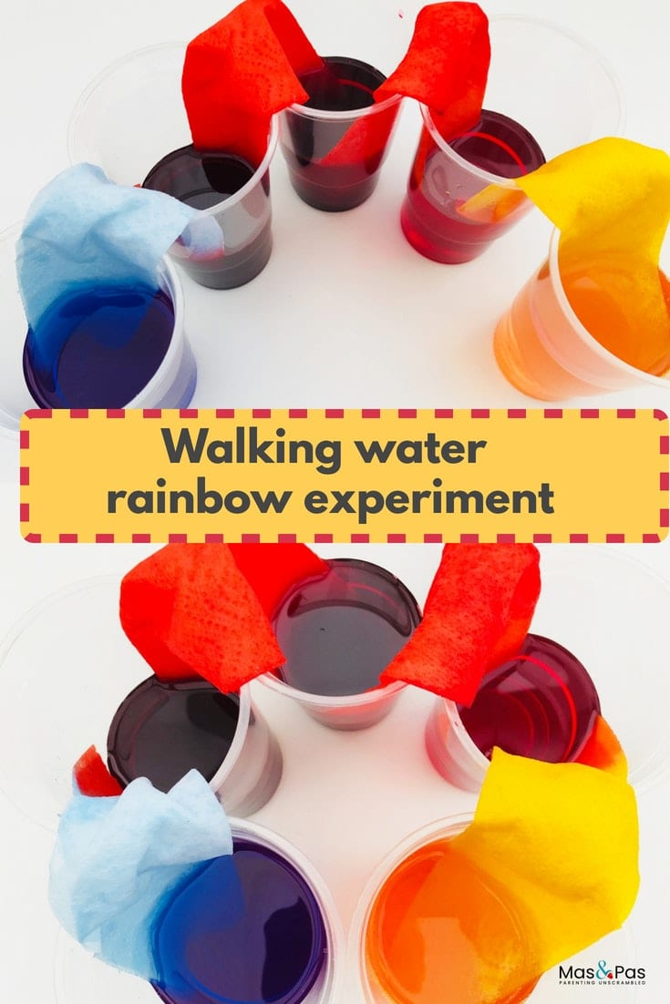 Walking rainbow water experiment for kids - teach kids about capillary action with this fun walking water activity